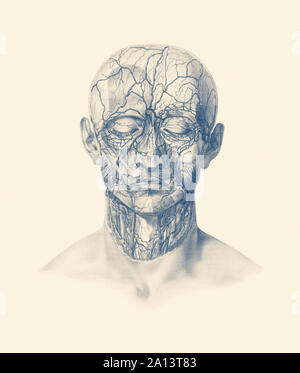 Anatomie Vintage print montrant des veines, artères, et les muscles tout au long de la tête humaine. Banque D'Images