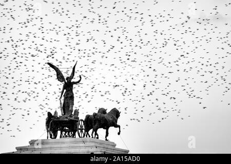 Statue de la déesse Victoria équitation sur quadriga sur le haut du monument de Vittorio Emanuele II entouré par les étourneaux , Rome, Italie Banque D'Images
