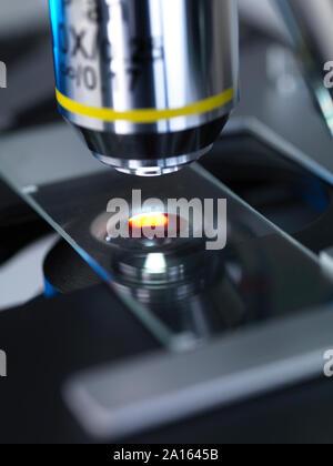 Les droits de l'échantillon à anaylised sous microscope in lab Banque D'Images