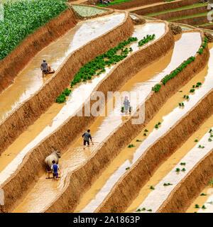 Nos gens au travail dans les rizières en terrasses à Mu Cang Chai, Yen Bai, dans la province nord-ouest du Vietnam. Banque D'Images