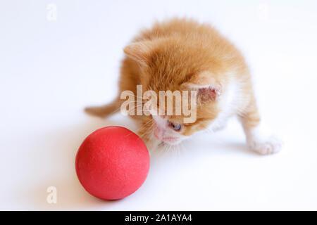 Gingembre mignon chaton jouant avec une boule rouge sur un fond blanc