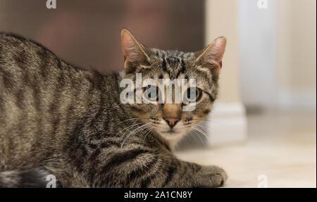 Une fois cette population de chat va trouver le bonheur et l'amour dans une nouvelle maison une fois adopté. Banque D'Images