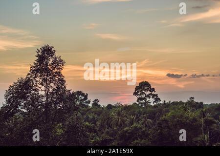 Red coucher de soleil sur la forêt tropicale. Soir Banque D'Images