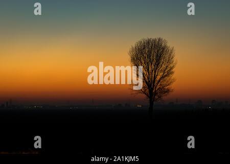 Silhouette d'un arbre solitaire contre le ciel du soir Banque D'Images