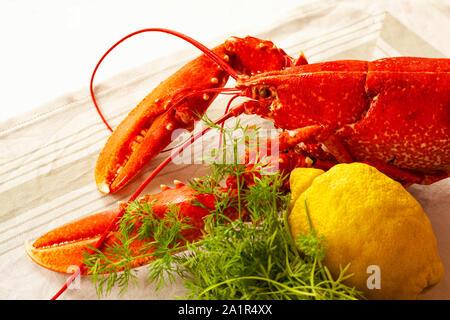 Red Lobster fraîchement bouillie allongé sur une table avec le citron et l'aneth. Droit