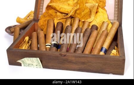 Les cigares dans une boîte sur fond blanc Banque D'Images