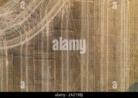 Vue aérienne regardez directement sur un champ de maïs récoltés frshly Banque D'Images