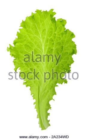 Feuille de laitue verte isolés sans ombre Banque D'Images