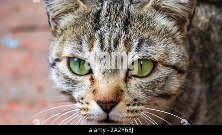 Gros plan d'un cat's eye