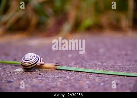 Un seul escargot rampe le long d'une route près d'un livre vert de l'herbe avec copyspace Banque D'Images