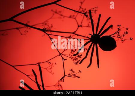 La mode créative avec fond halloween spider noir néon rouge sur fond clair. L'espace de copie, le minimalisme Banque D'Images