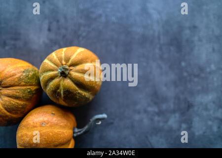 Happy Thanksgiving, sélection de diverses citrouilles sur fond noir en gris, les légumes d'automne et les décorations saisonnières, la bannière