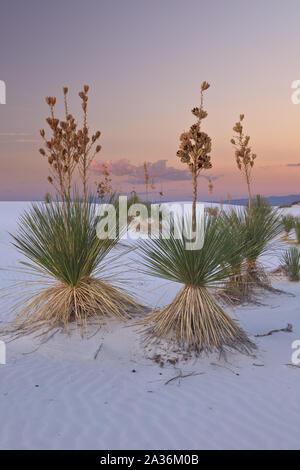 Coucher du soleil dans le White Sands National Monument, Nouveau-Mexique Banque D'Images