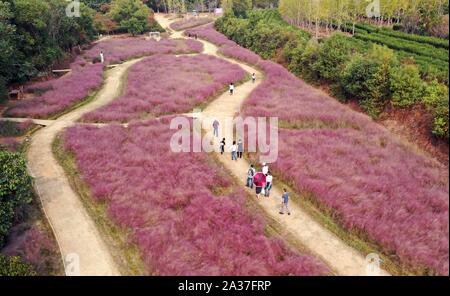Nanchang. 6 octobre, 2019. Photo aérienne prise le 6 octobre 2019 touristes montre rose visualisation muhly l'herbe dans le Fenghuanggou scenic area au cours de la Journée nationale de vacances à Nanchang, capitale de la province de l'est de la Chine. Credit: Peng Zhaozhi/Xinhua/Alamy Live News Banque D'Images