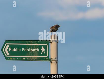 Un étourneau sur le poste d'un sentier public signe. Banque D'Images
