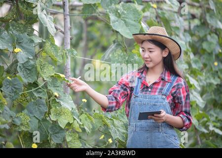 Les femmes asiatiques d'agronome et agriculteur en utilisant la technologie de l'inspection dans l'agriculture et le champ de légumes biologiques