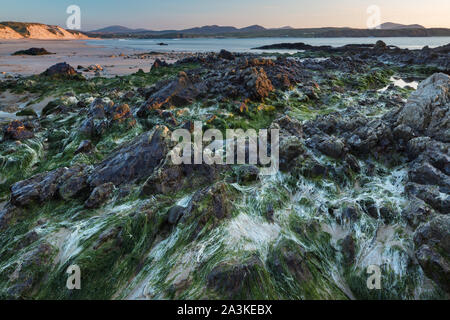 Rochers incrustés d'algues sur cinq doigts Strand, Trawbreaga Bay et Dunaff Head de soldats Hill, péninsule d'Inishowen, Co Donegal, Irlande Banque D'Images