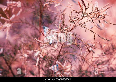 Résumé de l'été fond nature. Les branches avec des papillons Banque D'Images