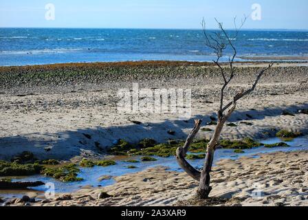 Une partie abandonnée de plage à la fin de l'été. Pris dans Wellfleet, Cape Cod en fin Septembre Banque D'Images