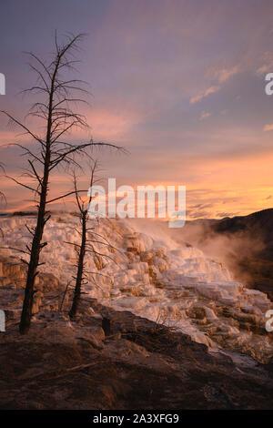 Secteur de printemps formations travertin au lever du soleil, la région de Mammoth Terrasses, Parc National de Yellowstone, Wyoming, USA. Banque D'Images