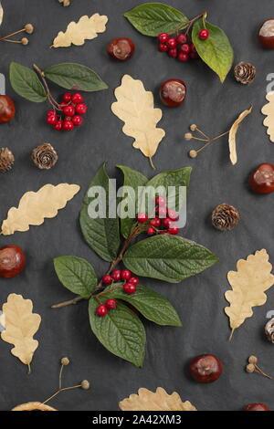 Fruits d'automne - affichage conkers, feuilles de chêne, Cotoneaster de baies, de tilleul (Tilia x europaea) fruits sur fond noir. UK