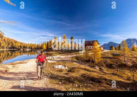 Randonneur sur sentier à Palmieri hut (Croda del Lago) en automne, Dolomites, Cortina d'Ampezzo, Belluno, Veneto, Italie Banque D'Images