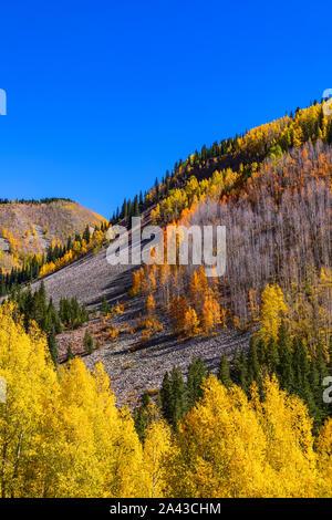 Couverture tremble de colline en jaune et orange, couleurs d'automne le long de la route 550 dans les montagnes de San Juan près de Silverton, Colorado. Banque D'Images