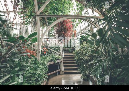 Jardins tropicaux frais Feuilles et feuillage en gaz à effet de serre, le Jardin botanique de plantes d'Intérieur