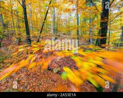 Des couleurs riches de l'automne automne saison annuelle en forêt près de Fuzine en Croatie motion-comme-intentionnellement floue dépeignant des images partielles de vitesse Banque D'Images