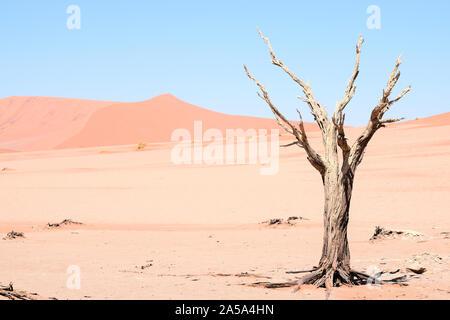 Un tronc d'arbre mort, entouré de sable rouge, au milieu du désert de Sossusvlei (ou Sossus Valley) en Namibie - Afrique. Grand comme arrière-plan. Banque D'Images