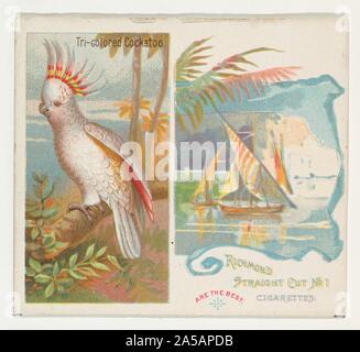 Cacatoès tricolore, d'oiseaux des tropiques série (N38) pour Allen & Ginter Cigarettes.jpg - 2A5APDB Banque D'Images