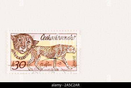 Jaune et orange La Tchécoslovaquie timbre-poste, avec copie espace, doté d''un guépard. publié en 1976. Scott # 2086 série d'animaux d'Afrique. Banque D'Images