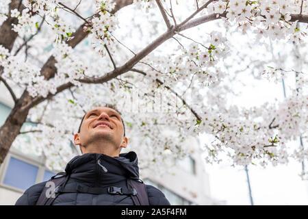 Shinjuku, Tokyo, Japon, avec un homme de tourisme low angle view looking up at cerisiers sakura en fleurs en mars city Banque D'Images