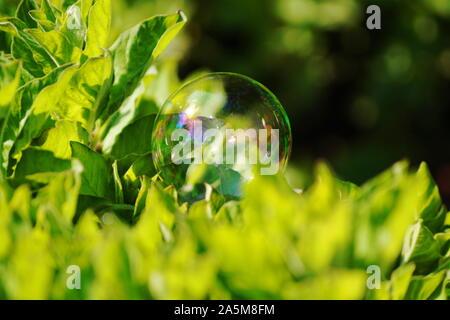 Belle soapbubble dans la nature avec un fond vert Banque D'Images