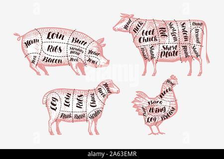 Programme de découpe de la viande. Boucherie, concept de boucherie. Illustration vectorielle vintage