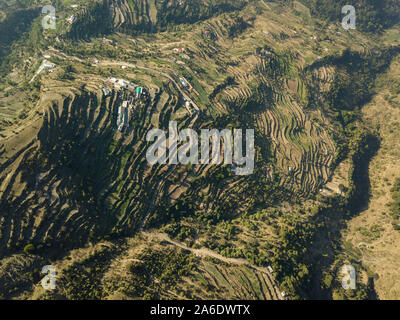 Terrasse de montagne champs paddy dans Uttarakhand, Inde Banque D'Images