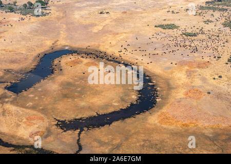 Vue aérienne de troupeau de bisons sur produit sec, lisse jaune et bleu foncé dans la rivière de Moremi, Okvango Delta, Botswana Banque D'Images