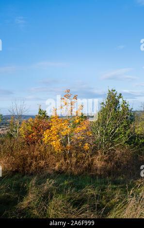 Paysage d'Automne, couleurs d'automne du feuillage d'arbres à feuilles caduques dans la forêt dans la campagne anglaise Banque D'Images