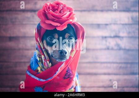 Chien avec le fichu rouge et une rose sur la tête. Chiot sous forme de Gypsy, Carmen, femme fatale Banque D'Images