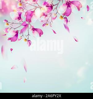 La nature de fond de printemps avec de jolies branches en fleurs magnolia à fond bleu clair avec des pétales et du soleil bokeh. Fleur pourpre