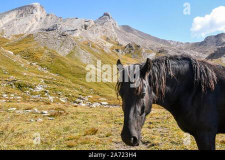 Portrait d'un cheval noir dans un paysage de montagne avec des crêtes rocheuses en arrière-plan dans une journée ensoleillée, Colle dell'Agnello, Piémont, Italie Banque D'Images