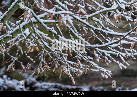 Beaucoup de neige sur les arbres après une forte tempête en Allemagne au cours de l'hiver Banque D'Images