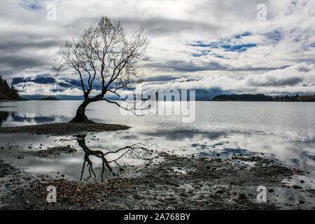 Le célèbre arbre reflétant dans le lac Wanaka sous ciel bleu et nuages. Banque D'Images