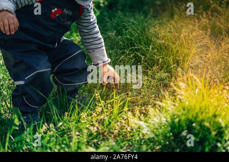 Jeune enfant entre un et deux ans la collecte des pommes de pin de les jeter dans un lait peut dans le jardin d'une ferme pendant l'été chaud soleil est Banque D'Images