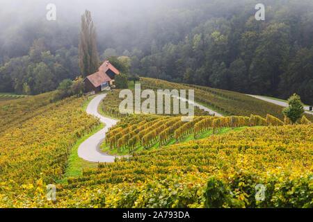 Paysage d'automne de la célèbre forme de coeur autrichien et slovène de la route du vin au milieu des vignes, près de Maribor en Slovénie Banque D'Images