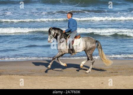 L'homme cheval d'équitation sur la plage Banque D'Images