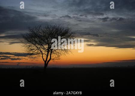 Silhouette d'un arbre isolé contre le ciel crépusculaire au cours de l'heure bleue en Transylvanie, Roumanie Banque D'Images