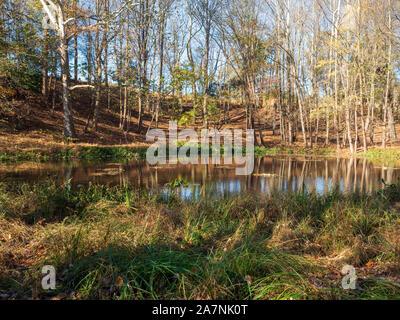 Petit étang dans la forêt à l'automne