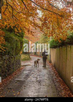 Un homme promène son chien dans Ladderbanks Lane Baildon, Yorkshire.