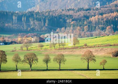Avis de Solling forêt, Weser, Basse-Saxe, Allemagne
